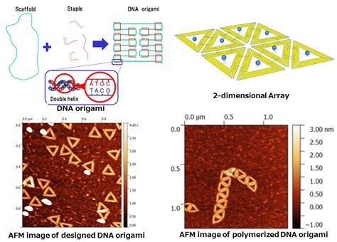 dna origami applications 2d array formation of dna origami nano micro system lab
