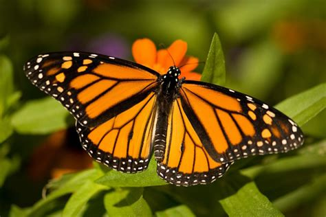 of a butterfly butterfly farms research conservation and education