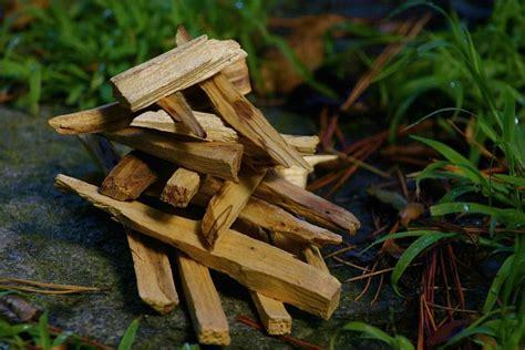 where to buy wood for woodworking buy palo santo sacred wood sticks palo santo incense