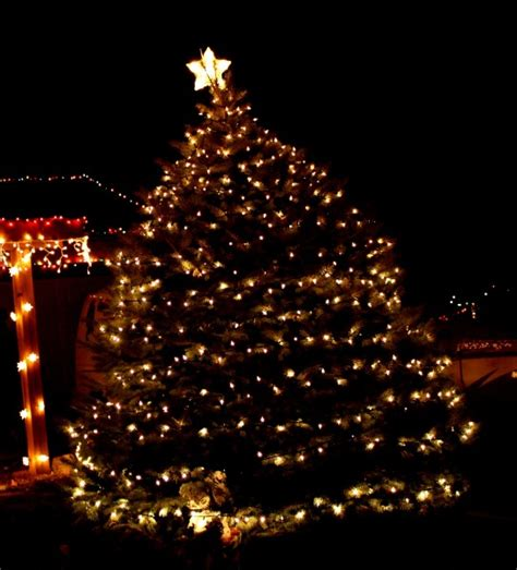 outdoor tree lights tree with white lights picture free photograph
