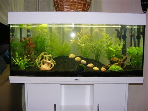 projet aquarium juwel 180 litres de natibou