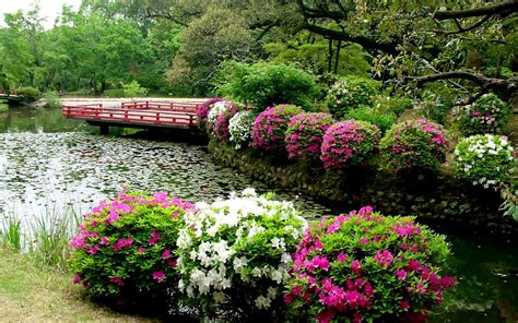 flowers for home garden house flower garden home ideas beautiful flowers with