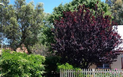 small colored trees deciduous trees for smaller gardens lakeside