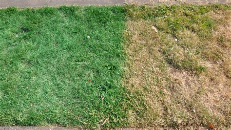 spray painting your lawn staten island lawns get spray painted legally animal