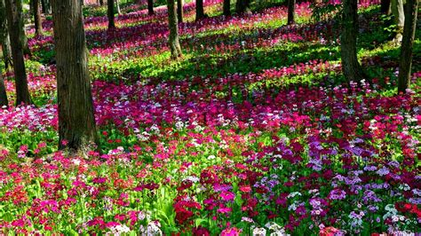 images of beautiful flower gardens flower garden wallpapers wallpaper cave