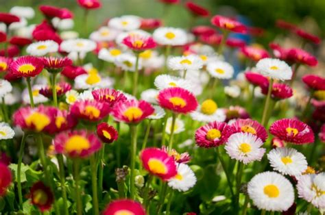 of flowers colourful of flowers photo free