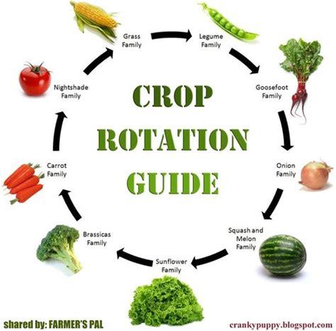 crop rotation home vegetable garden violet zen crop rotation tips for better