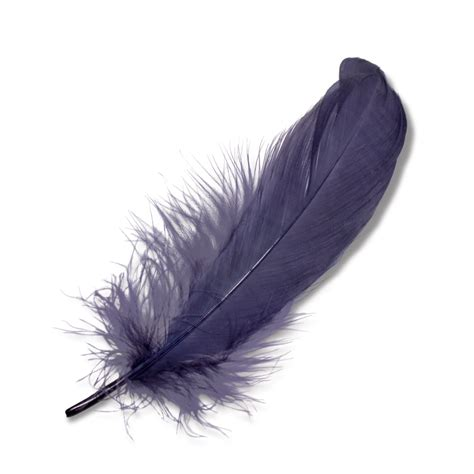 feather with prinia feather goorin bros hat shop