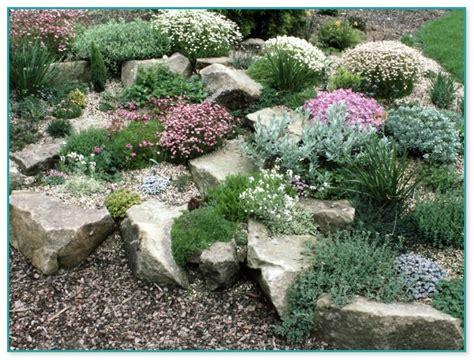 rock garden plants for sale garden herb plants for sale