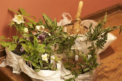 rock garden plants for sale winter plant buying spree