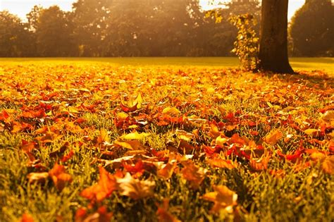 for fall fall lawn care tips do it right lawn care