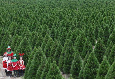 melbourne tree trees melbourne farm 28 images melbourne tree farm