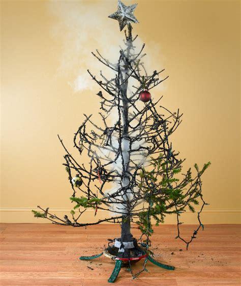 weihnachtsbaum pflege weihnachtsbaum kaufen tipps zu kauf transport pflege