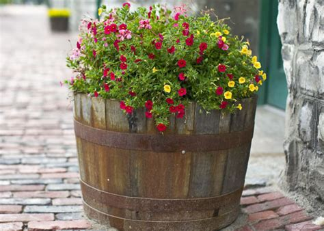 Whiskey Barrel Planter Home Depot by Plant A Garden Barrel For Your Zone Garden Club