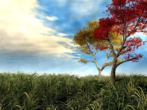 colorful tree colorful tree wallpapers 1024x768 545187