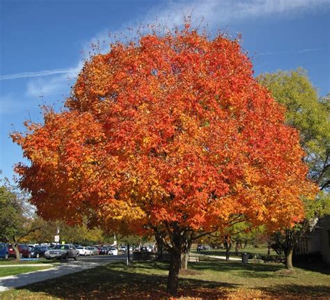 5 most popular trees to brighten your landscape