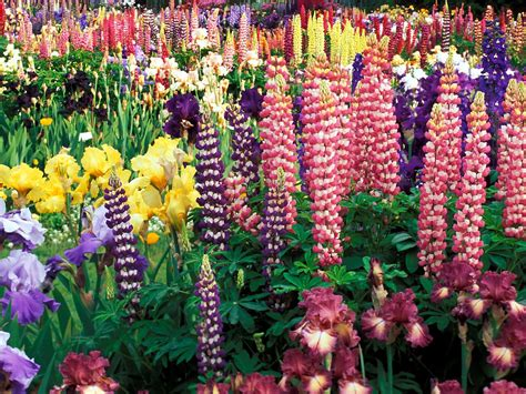 flowers gardens pictures sun shines colorful flowers background