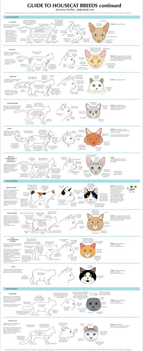 cat painting guide guide to housecat breeds 2 by majnouna on deviantart