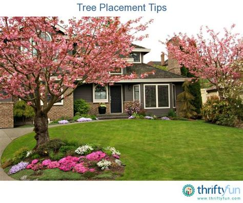 where to place a tree tree placement tips trees yard maintenance and yards