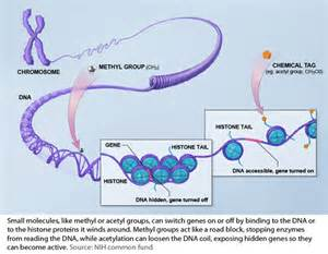 bead like proteins around which dna coils genetics is so last century bernie s basics abc science