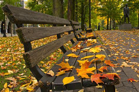 for fall fall 40winksaday