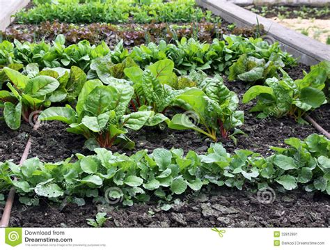 what to plant in raised vegetable garden raised vegetable garden bed with watering system stock