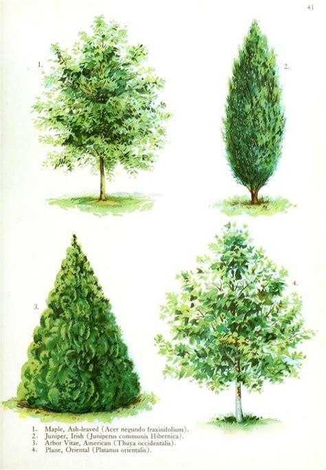 type of trees botanical trees vintage printable at swivelchair media