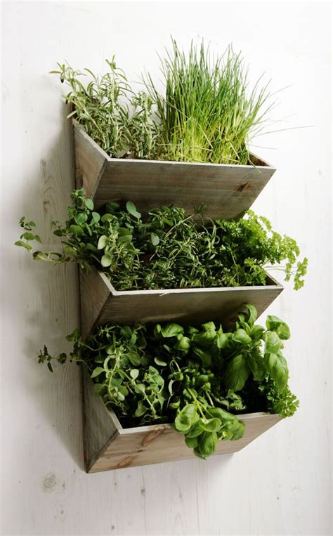 garden wall planter 25 best ideas about wall planters on diy