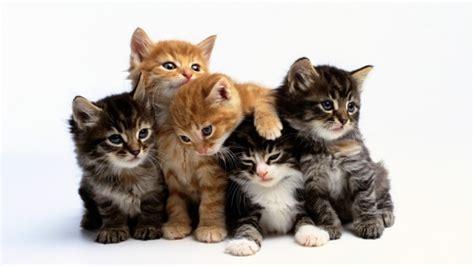 cat pictures top 10 cat names in 2017 tips