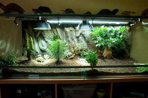 exemple terrarium astrochelys radiata v2