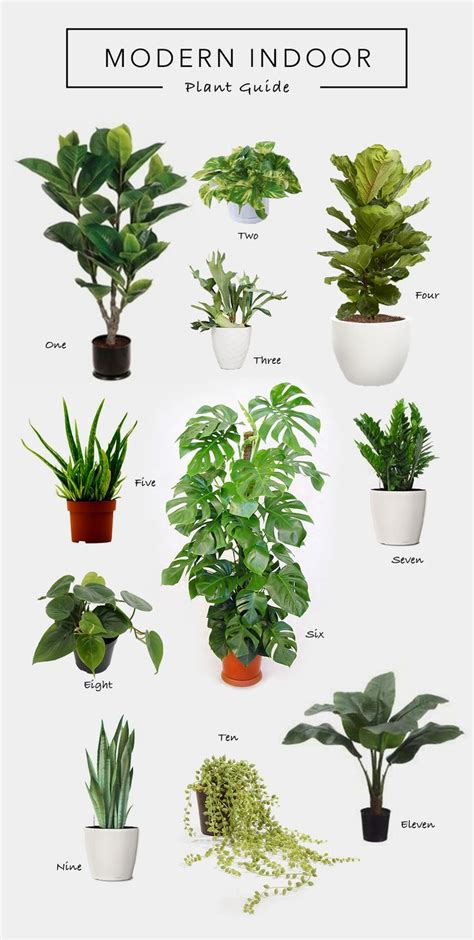 modern plants indoor 17 best ideas about string of pearls on