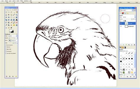 drawing software free parrot drawing