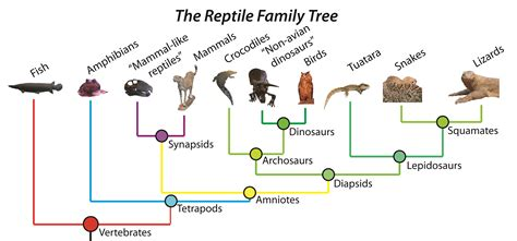 Modified Family Definition by The Reptile Family Tree Dinos For