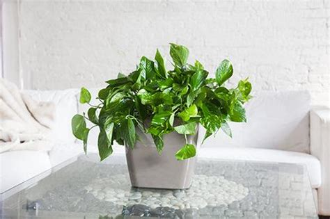 plants for the office nyc office plant delivery service