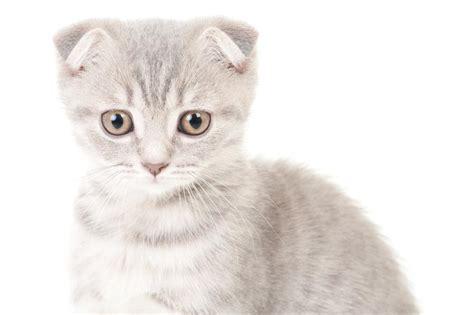 for cat names for gray kittens slideshow