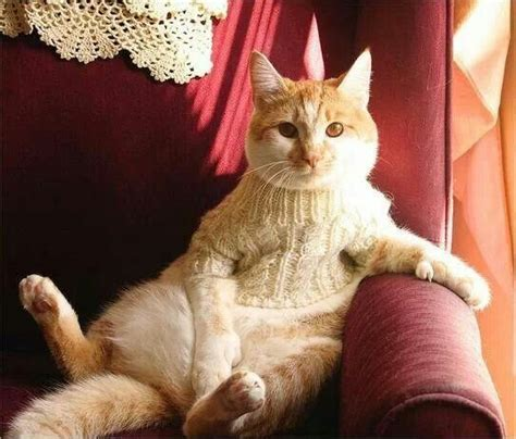 knitting cat hair 228 best images about knitting cats on cat
