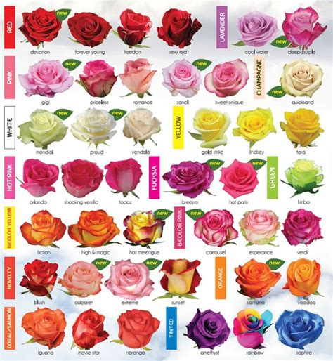 garden flower types 30 diagrams to make you master in growing roses chart