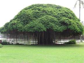 type of trees 25 different types of trees and their uses styles at