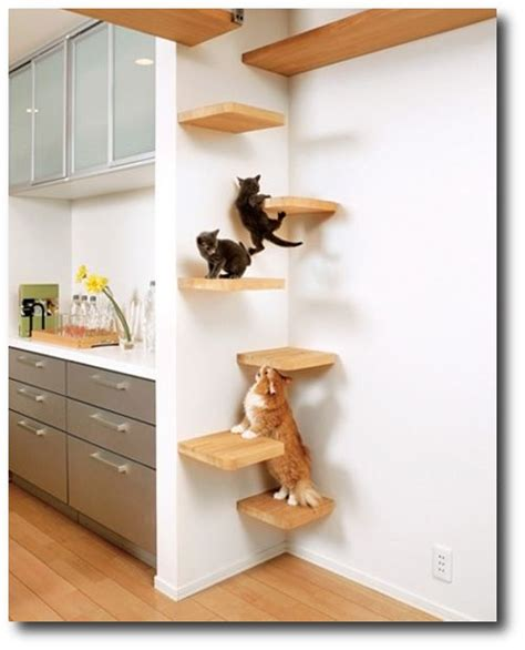cat ideas 1000 images about animal ideas on cat shelves