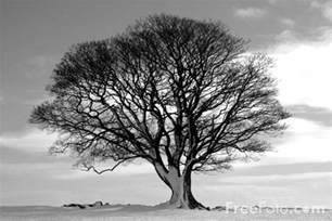 tree in white tree black and white pictures free use image 15 01 33