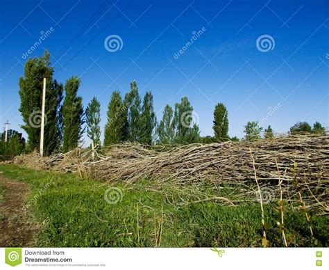 tree made of branches a fence made of tree branches stock photo image 70457071
