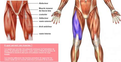 anatomie du genou droit
