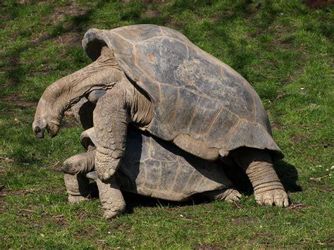 zoo animals zoo animals amsterdam olympus e 410