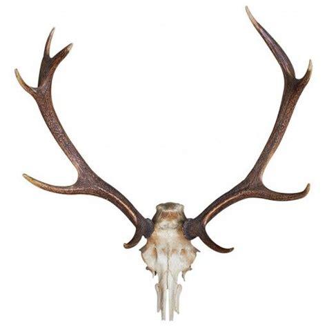 deer antler deer antlers design