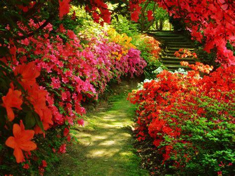 flower garden photos garden flowers flowers photo 32600572 fanpop