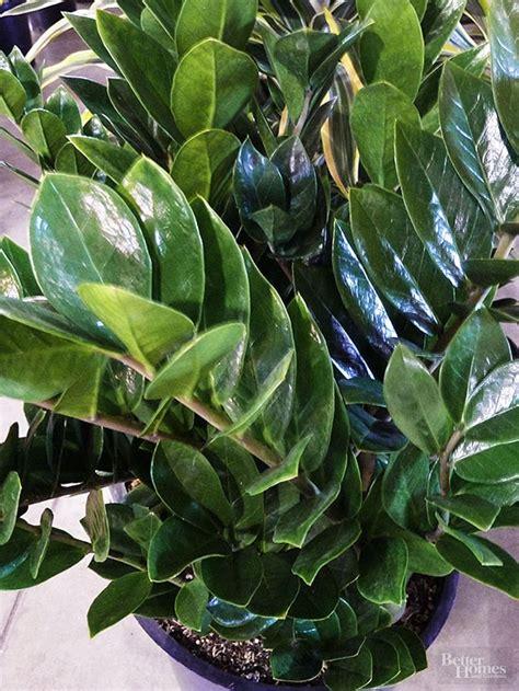 best plant for indoor low light indoor plants for low light