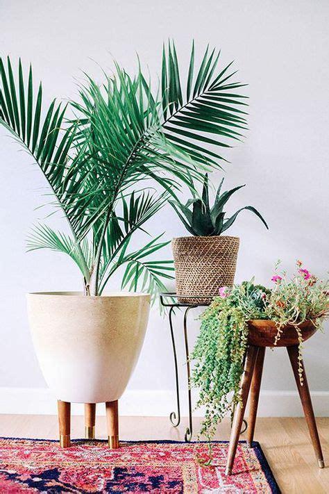 modern plants indoor 25 best ideas about bohemian decor on