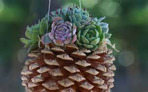 succulent planter ideas 15 unique and creative succulent planter ideas garden