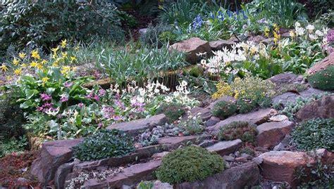 scottish rock garden scottish rock garden club gt bulb log gardens