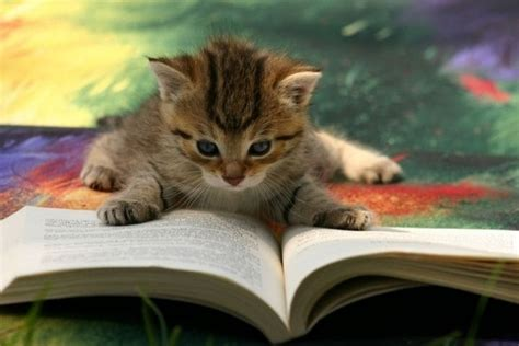 picture books about cats cats kittens reading books 18 pictures